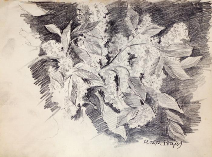Огородов Г.В. Цветение